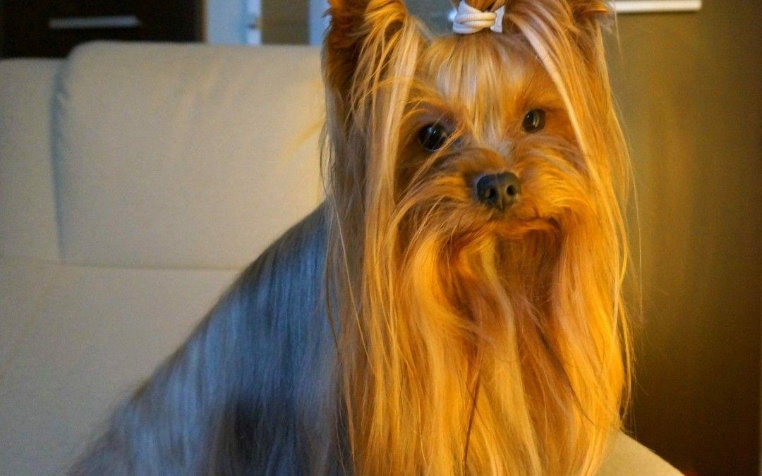 Mi perro hace Reiki en un Hotel de O Grove