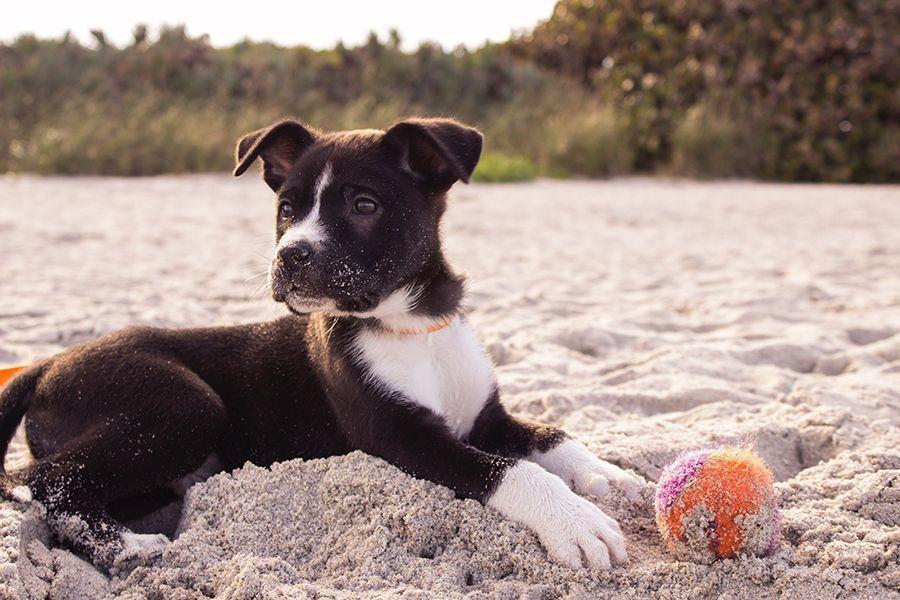 Galicia: El turismo con mascotas